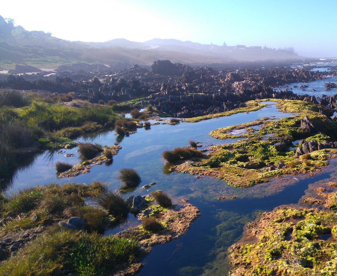 New species discovered in South Africa's stromatolites - News